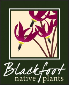 Blackfoot Native Plants logo - magenta shooting stars with dark green border