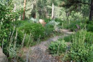 gravel path curving through lush green garden