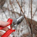 person's hand holding pruning shears cutting a branch