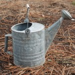metal watering can sitting on pine needles