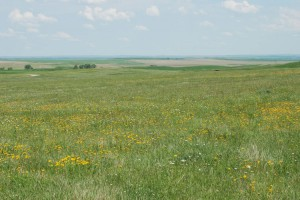 prairie grassland with yellow and white wildflowers